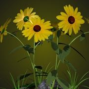 PL Black Eyed Susan 3d model