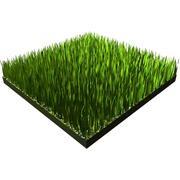 Gras 3d model