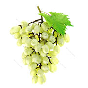 Grapes white 3d model