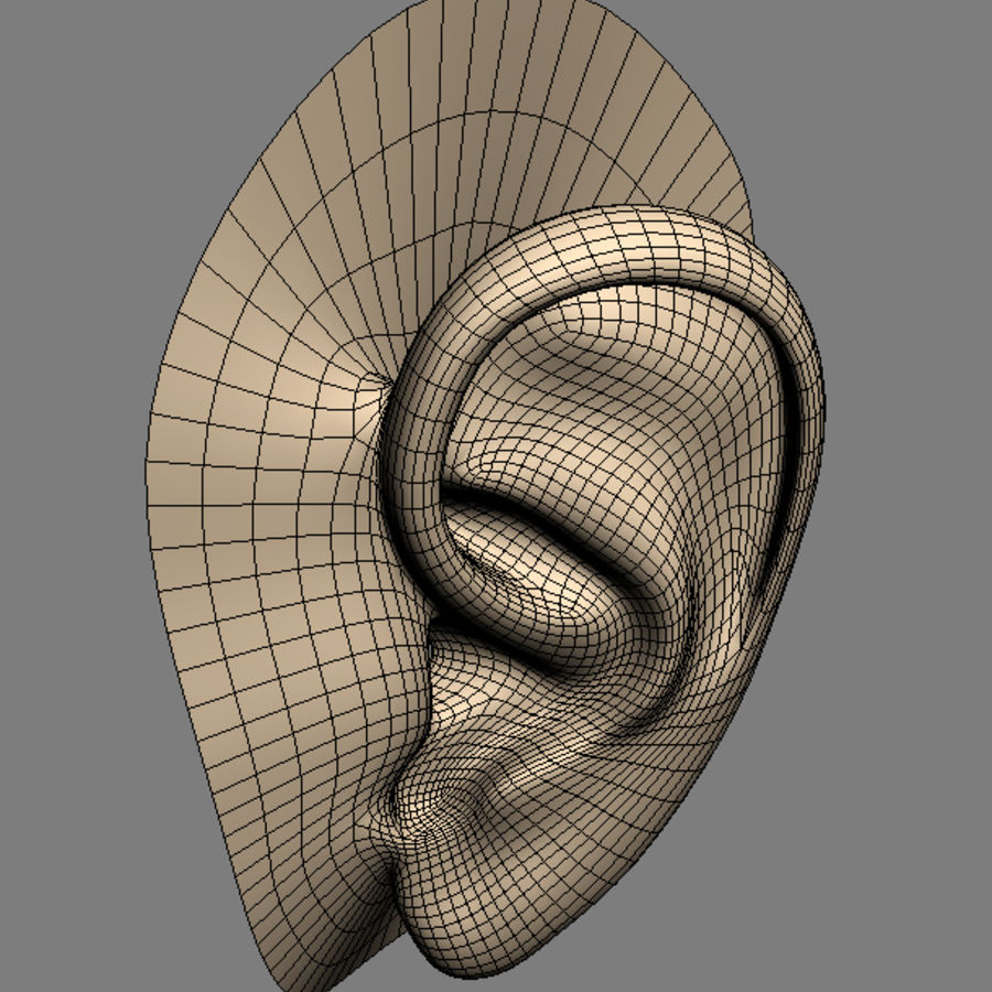 ear_max royalty-free 3d model - Preview no. 5