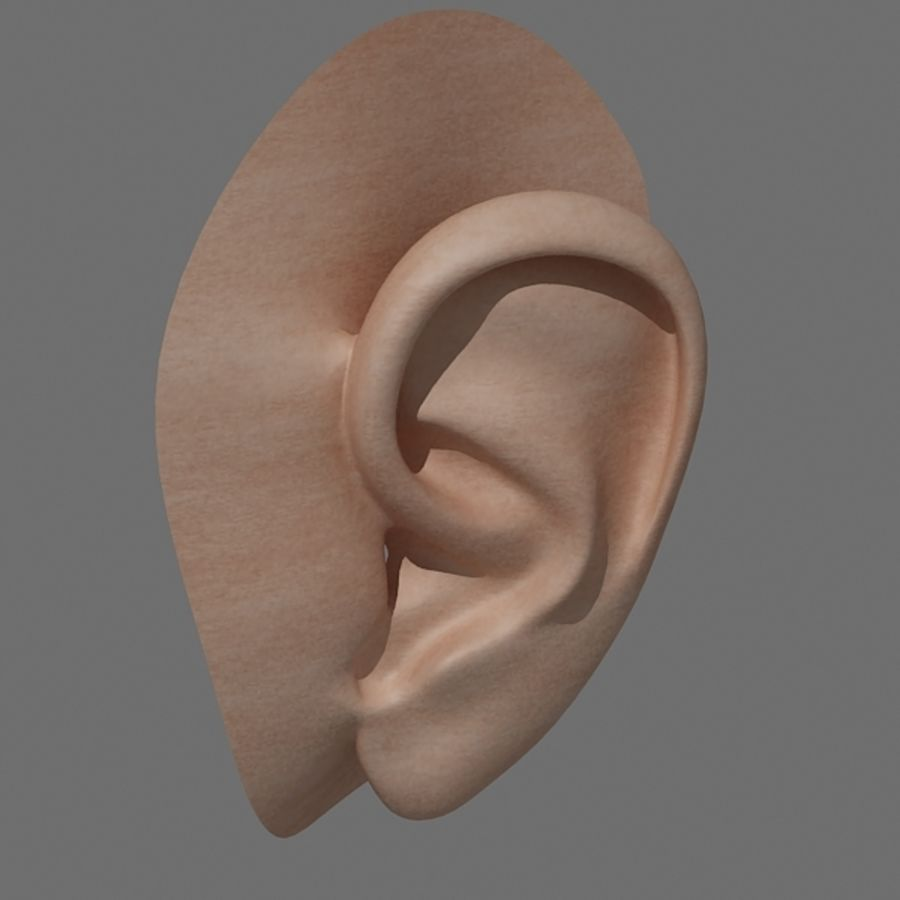 ear_max royalty-free 3d model - Preview no. 1