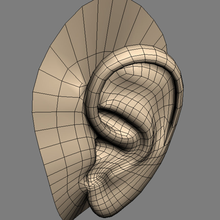 ear_max royalty-free 3d model - Preview no. 4