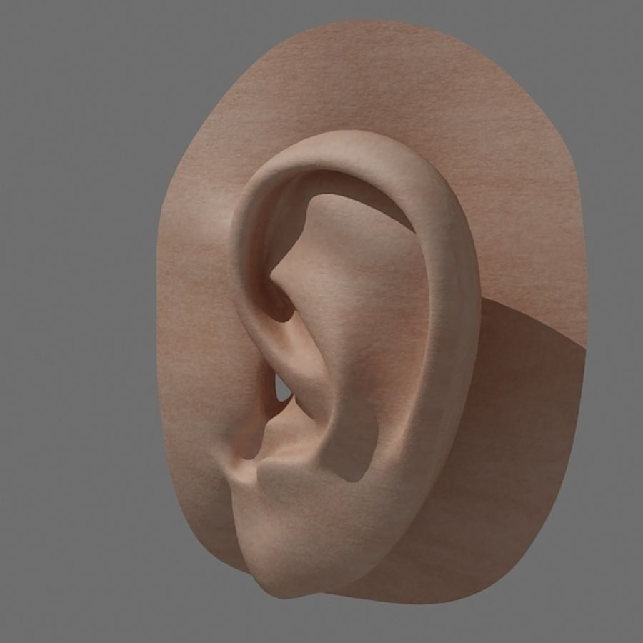 ear_max royalty-free 3d model - Preview no. 2