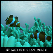 clown fishes and anemones 3d model