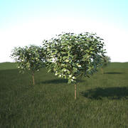 vray grass and tree 3d model
