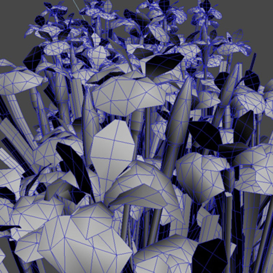 Pflanze Iris Blumen royalty-free 3d model - Preview no. 5