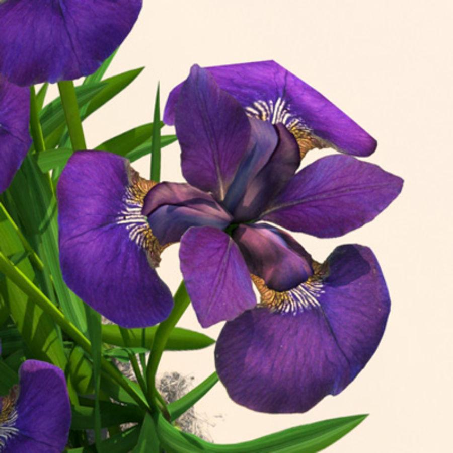Pflanze Iris Blumen royalty-free 3d model - Preview no. 1
