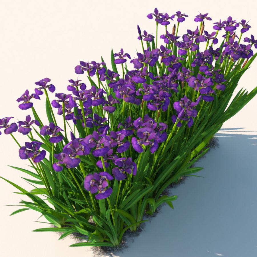 Pflanze Iris Blumen royalty-free 3d model - Preview no. 3