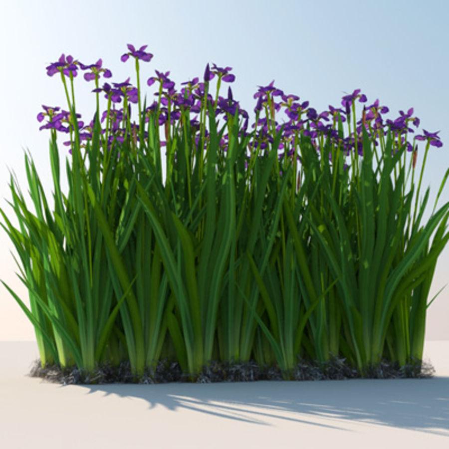 Pflanze Iris Blumen royalty-free 3d model - Preview no. 4