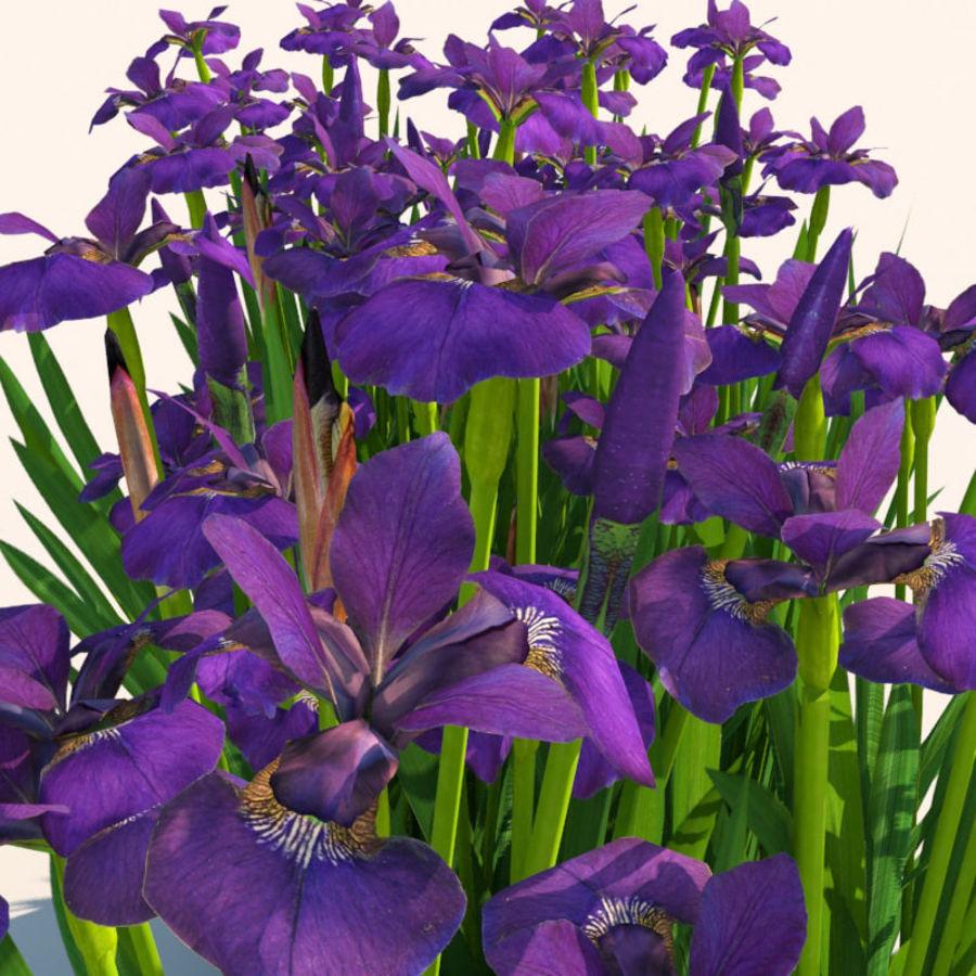 Pflanze Iris Blumen royalty-free 3d model - Preview no. 2