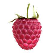 Raspberry 3d model