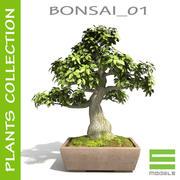 Drzewo - Bonsai_01 3d model