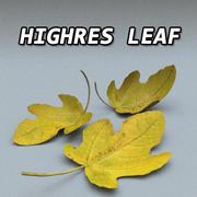 Leaf High Resolution 3d model