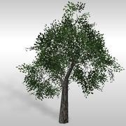 Oak tree # 6 3d model