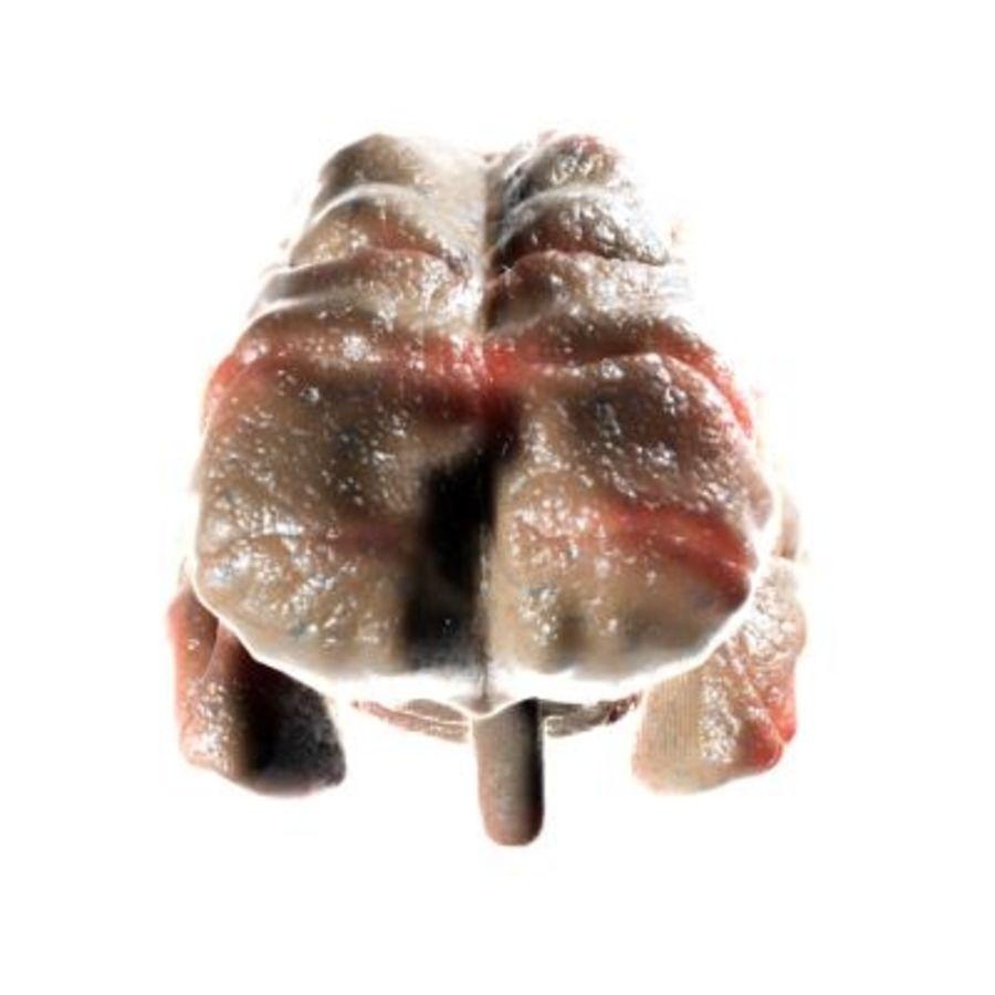 Mänsklig hjärna royalty-free 3d model - Preview no. 3
