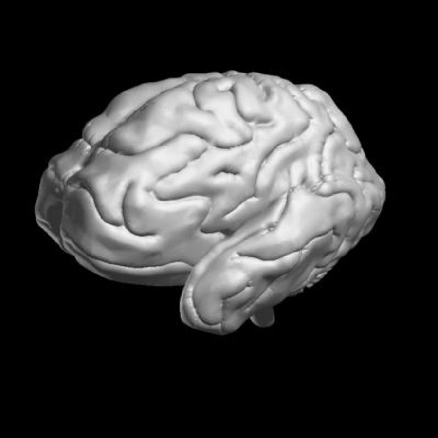 Mänsklig hjärna royalty-free 3d model - Preview no. 6