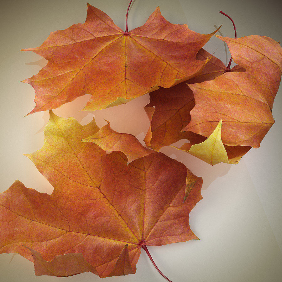 Autumn maple leaf royalty-free 3d model - Preview no. 5