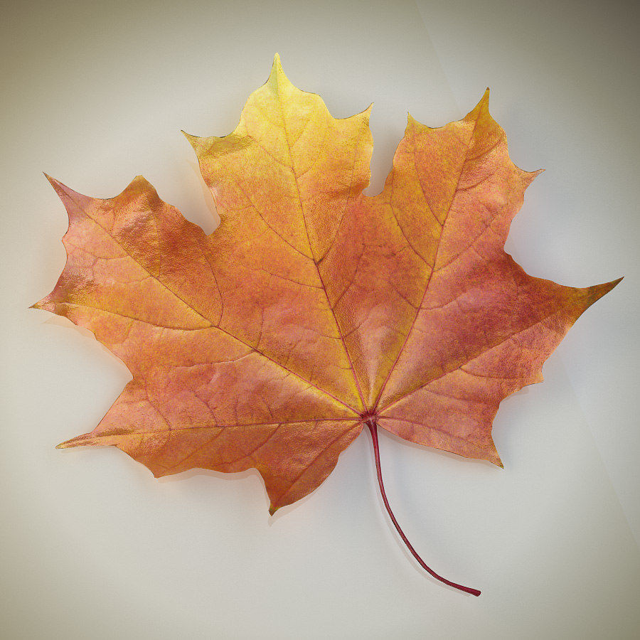 Autumn maple leaf royalty-free 3d model - Preview no. 2