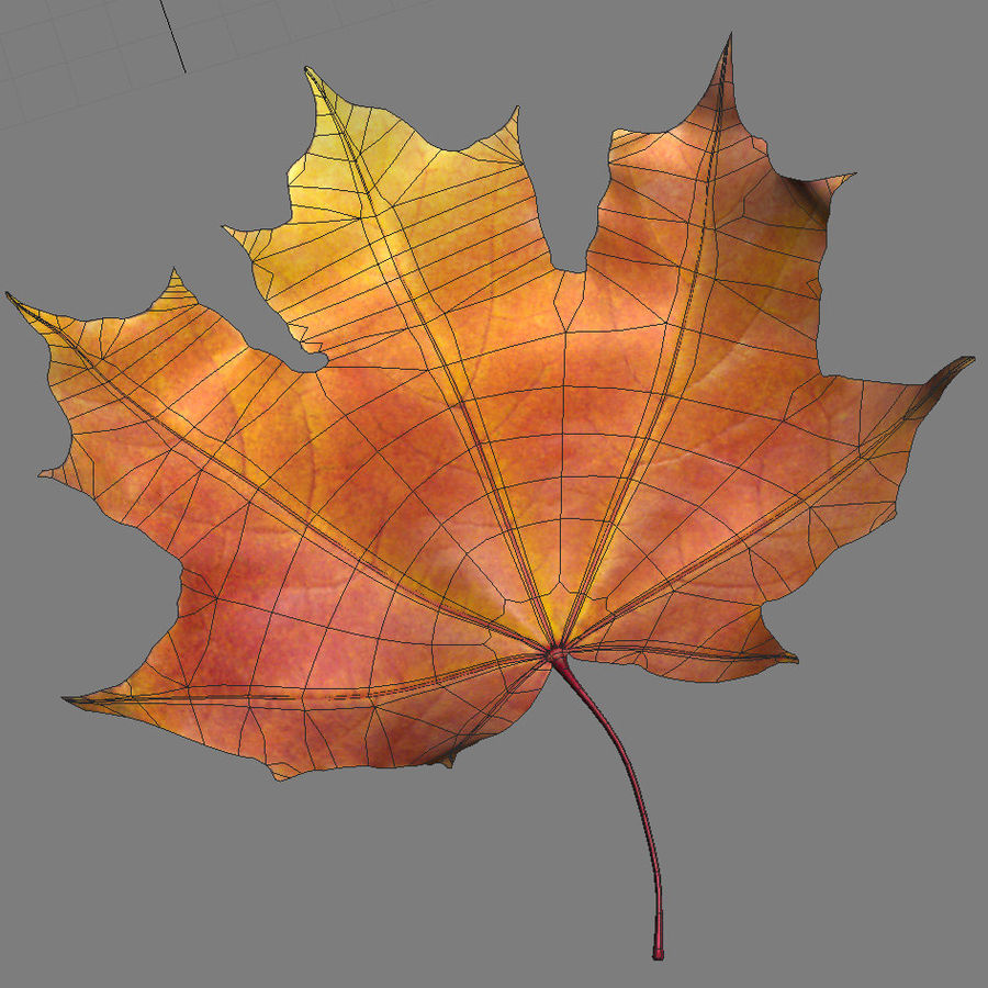Autumn maple leaf royalty-free 3d model - Preview no. 8