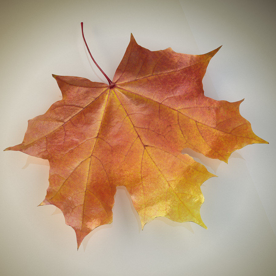 Autumn maple leaf royalty-free 3d model - Preview no. 1