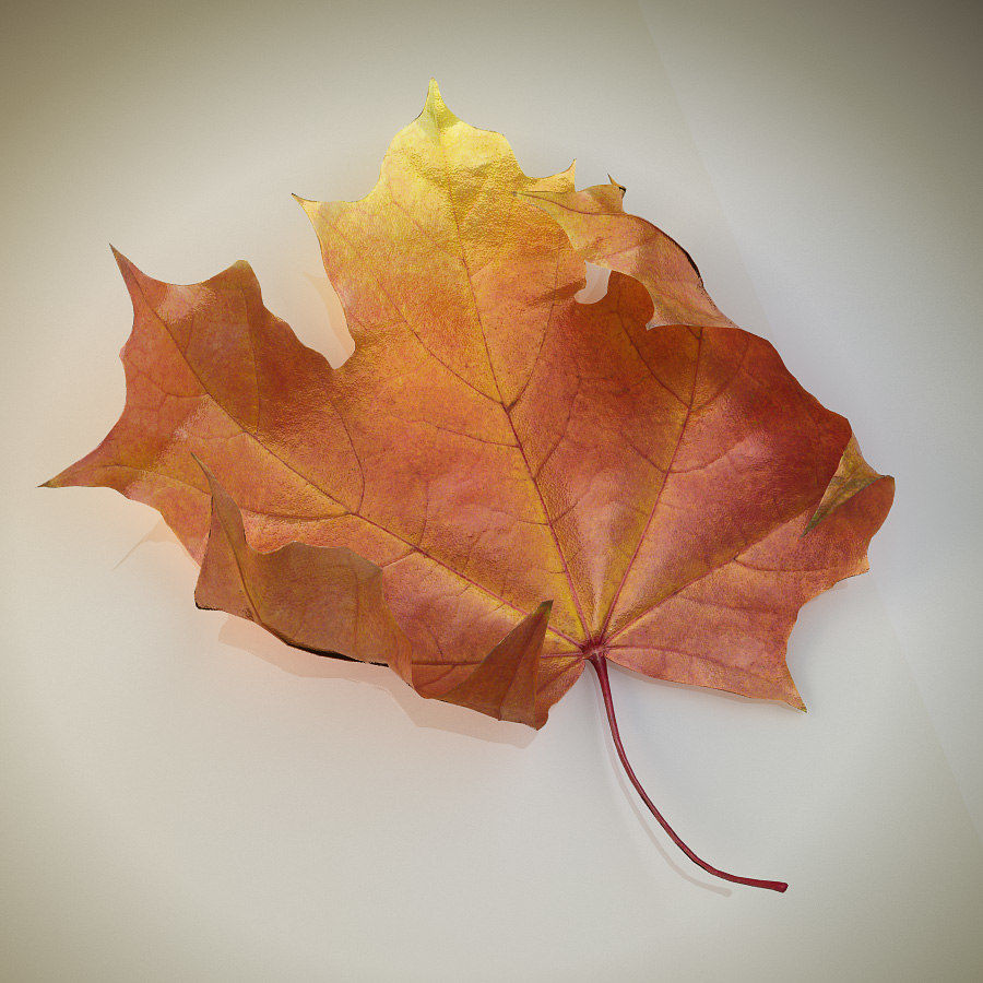 Autumn maple leaf royalty-free 3d model - Preview no. 4