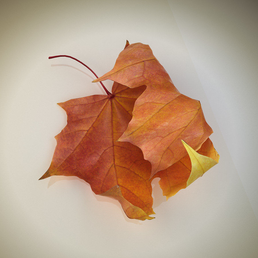 Autumn maple leaf royalty-free 3d model - Preview no. 3