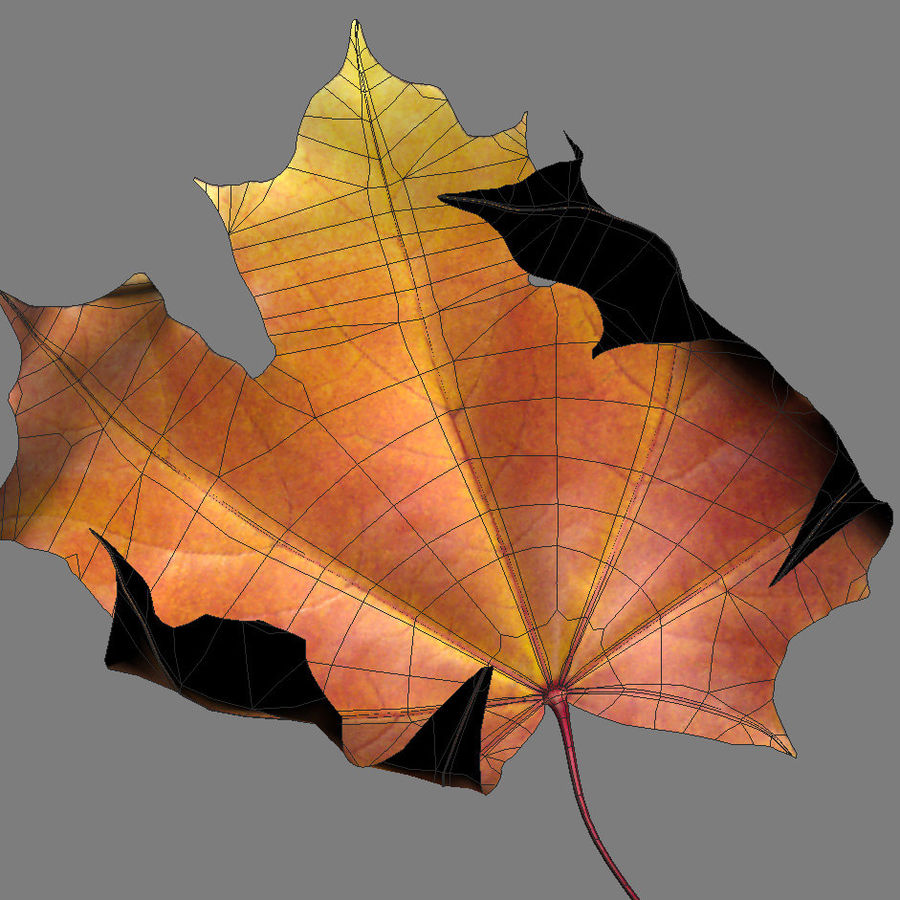 Autumn maple leaf royalty-free 3d model - Preview no. 6