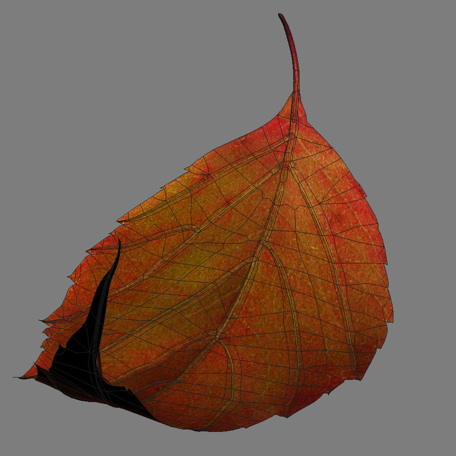 Autumn leaf red royalty-free 3d model - Preview no. 7