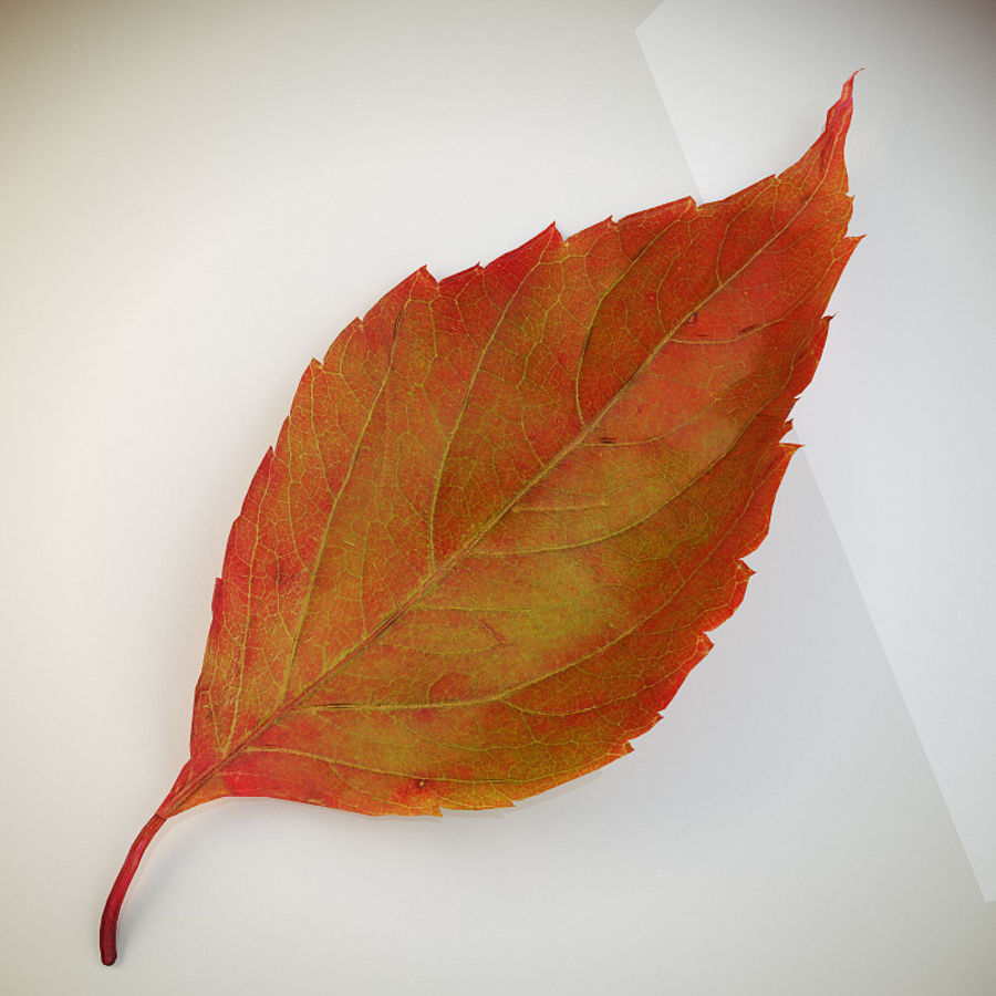 Autumn leaf red royalty-free 3d model - Preview no. 1