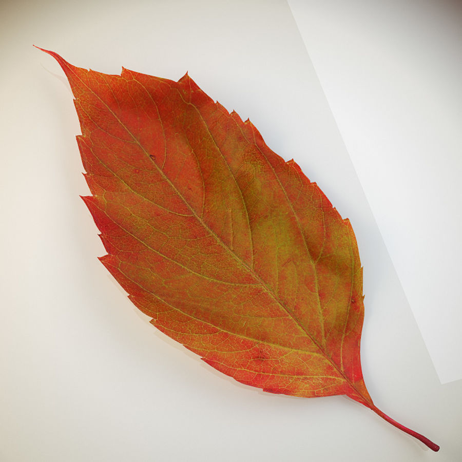 Autumn leaf red royalty-free 3d model - Preview no. 3