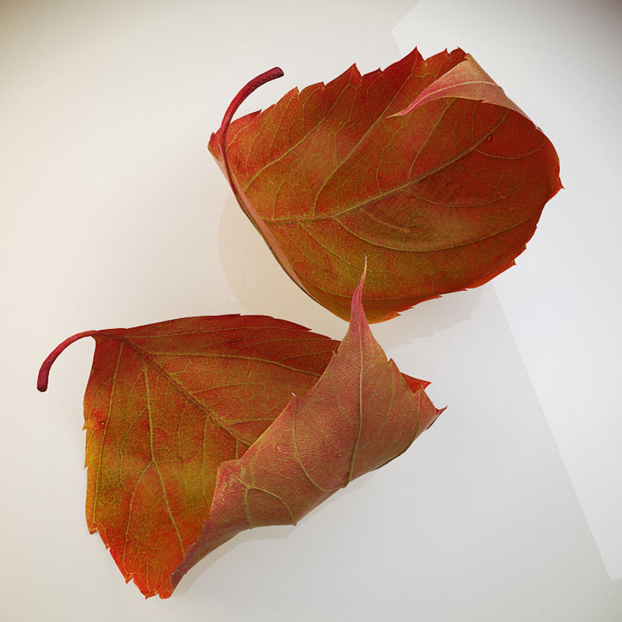 Autumn leaf red royalty-free 3d model - Preview no. 5