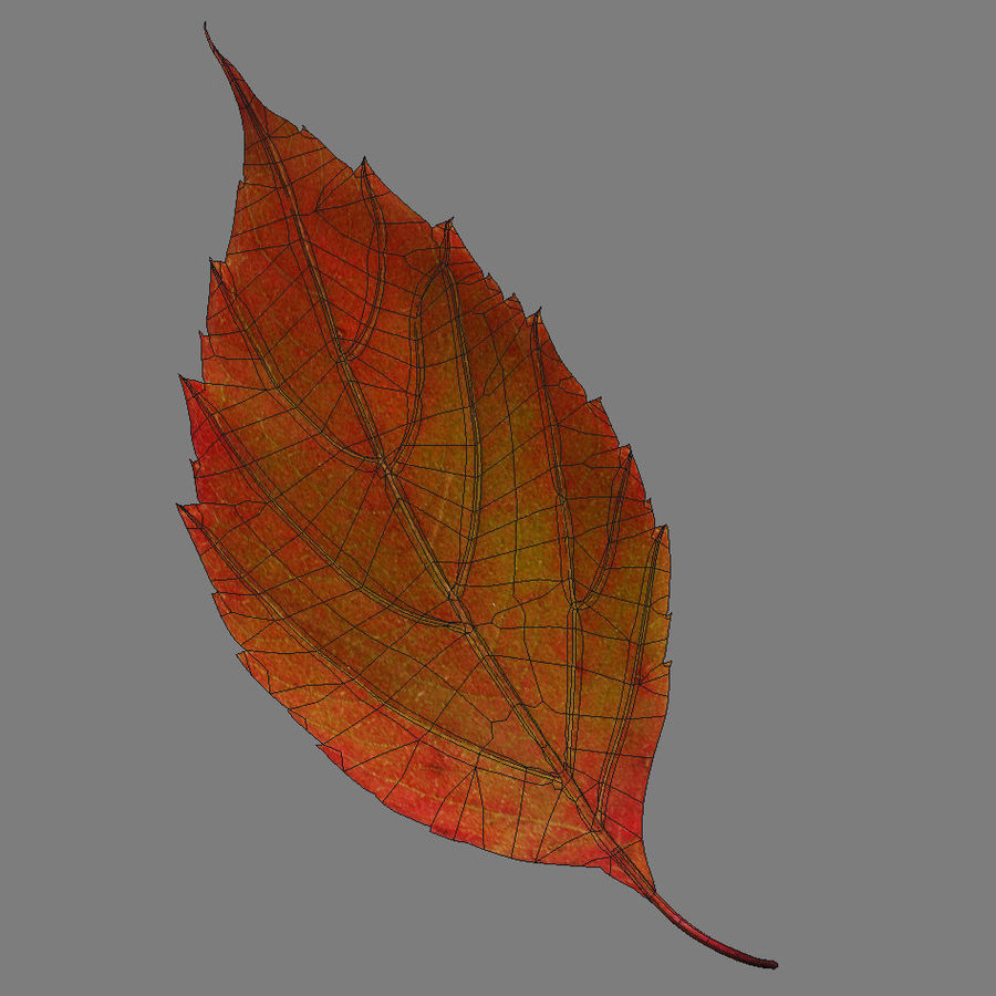 Autumn leaf red royalty-free 3d model - Preview no. 9