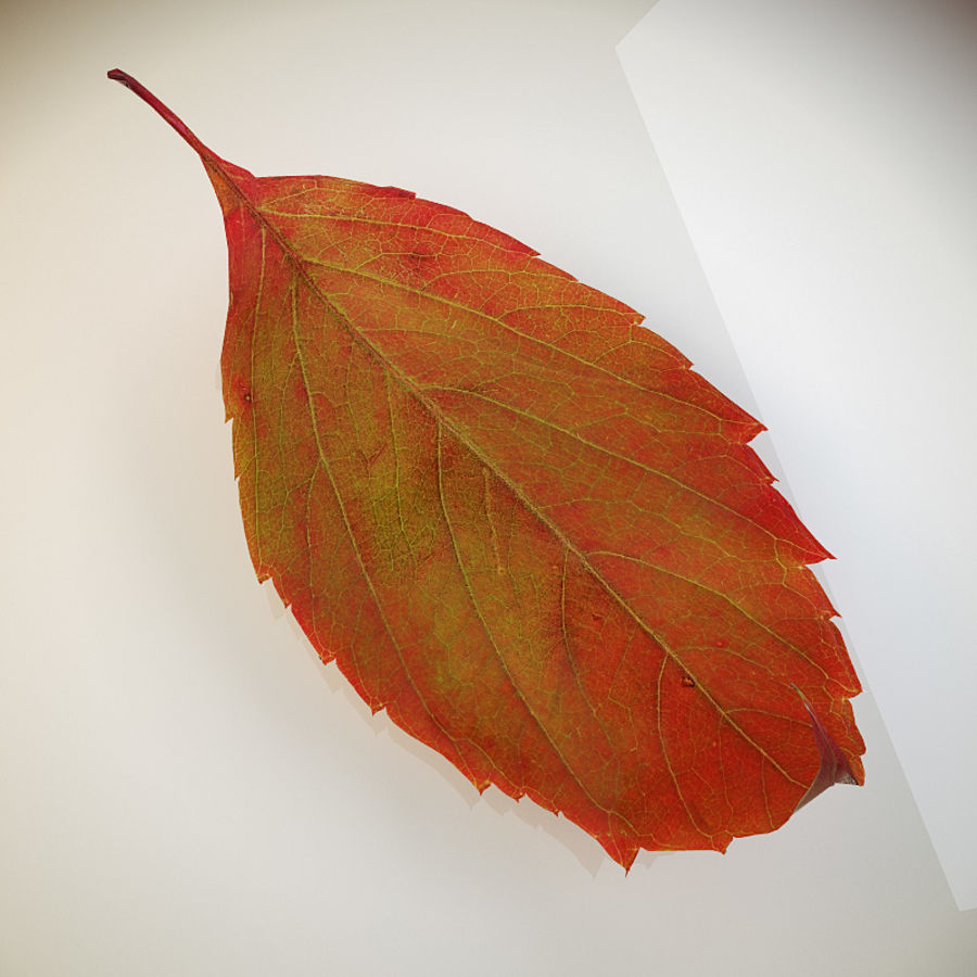 Autumn leaf red royalty-free 3d model - Preview no. 4