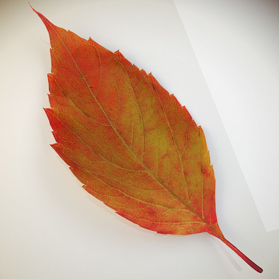 Autumn leaf red royalty-free 3d model - Preview no. 2