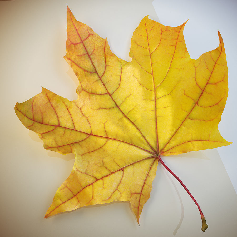 Autumn leaf 2 royalty-free 3d model - Preview no. 3