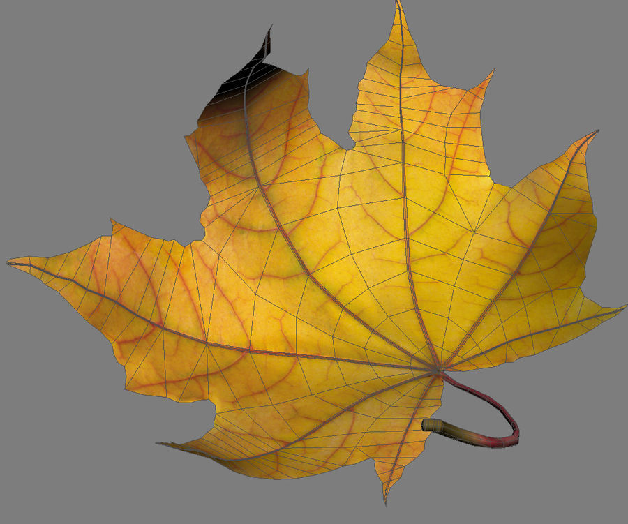 Autumn leaf 2 royalty-free 3d model - Preview no. 10
