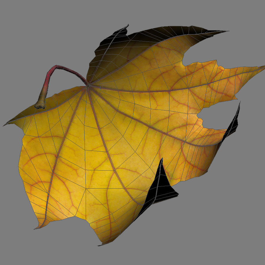 Autumn leaf 2 royalty-free 3d model - Preview no. 8