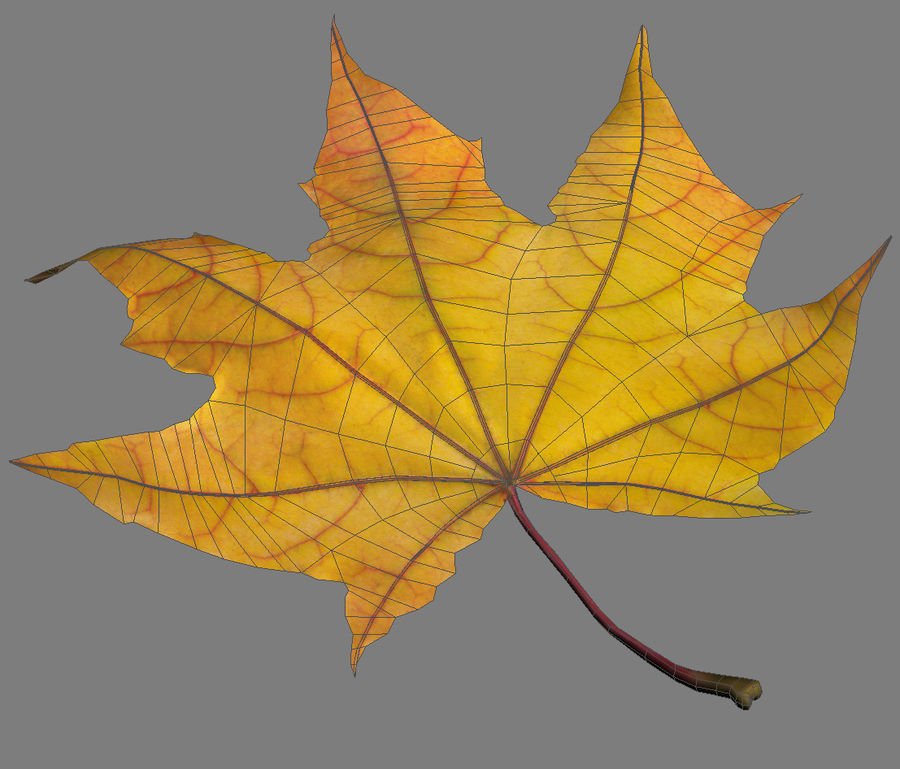 Autumn leaf 2 royalty-free 3d model - Preview no. 6
