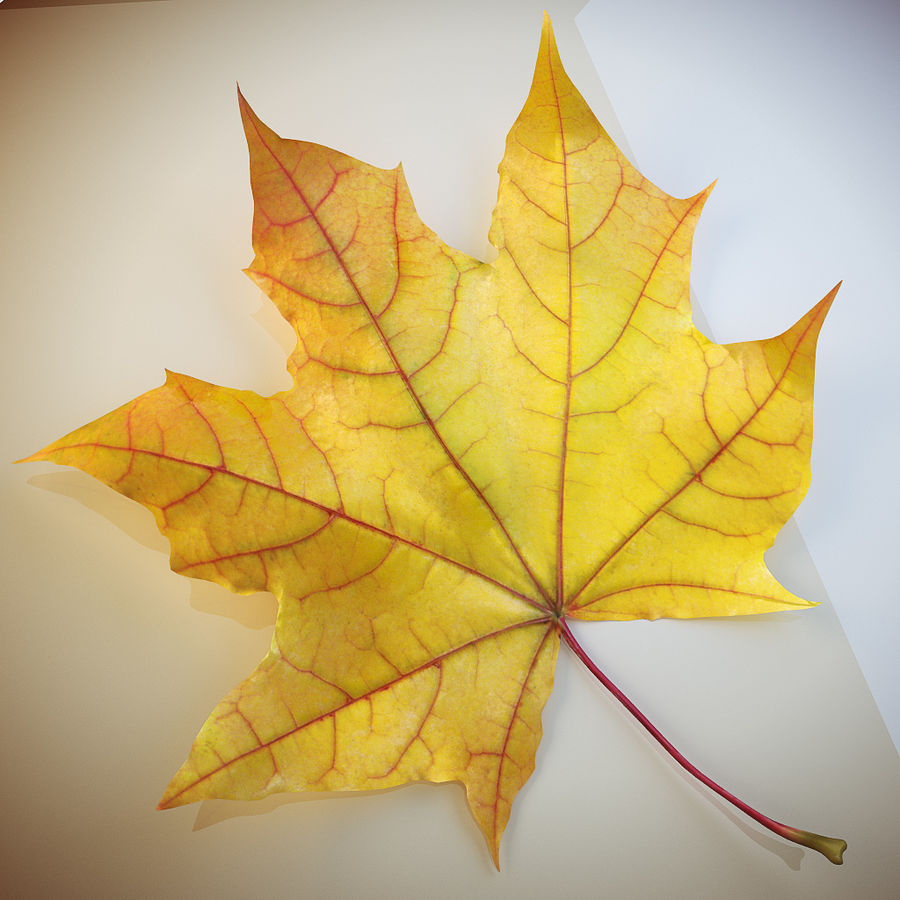 Autumn leaf 2 royalty-free 3d model - Preview no. 2