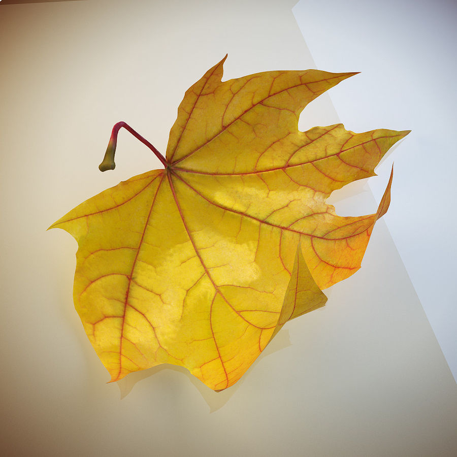 Autumn leaf 2 royalty-free 3d model - Preview no. 5