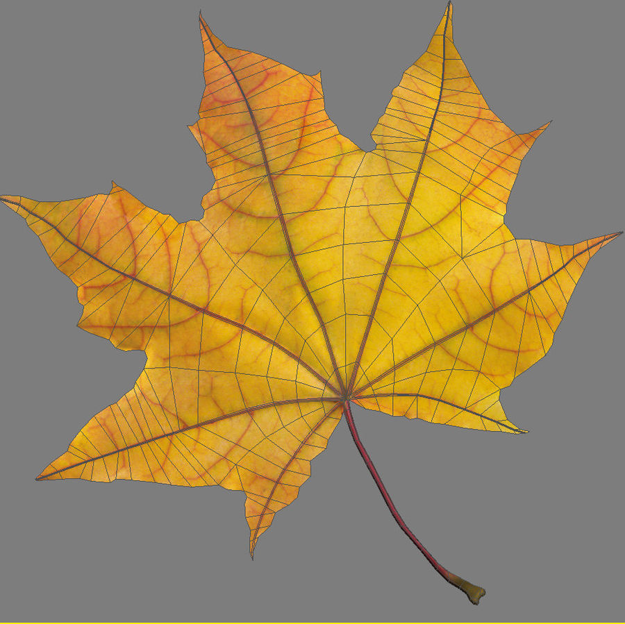 Autumn leaf 2 royalty-free 3d model - Preview no. 9