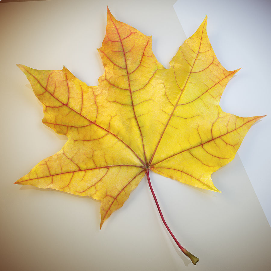 Autumn leaf 2 royalty-free 3d model - Preview no. 1