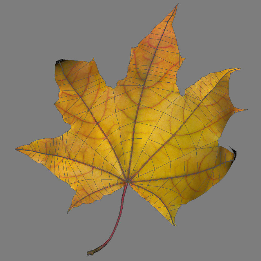 Autumn leaf 2 royalty-free 3d model - Preview no. 7