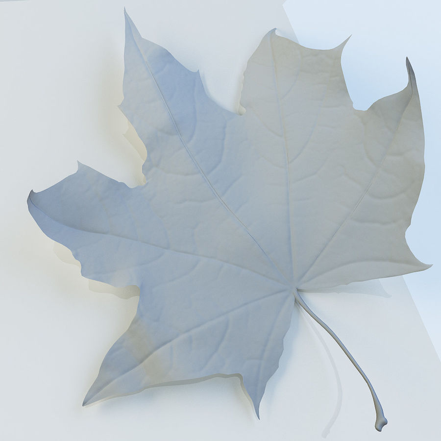 Autumn leaf 2 royalty-free 3d model - Preview no. 11