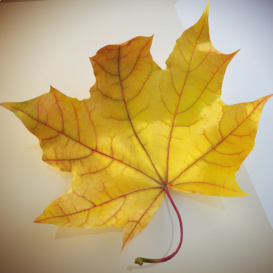 Autumn leaf 2 royalty-free 3d model - Preview no. 4