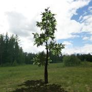 Modelo de árvore # 11 3d model
