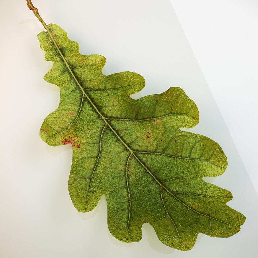 Autumn leaf oak royalty-free 3d model - Preview no. 3