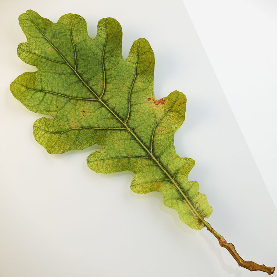 Autumn leaf oak royalty-free 3d model - Preview no. 1