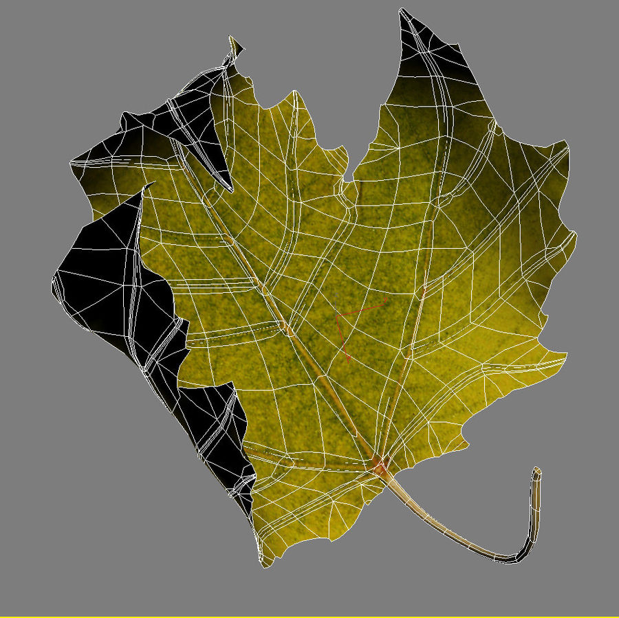 Autumn leaf poplar royalty-free 3d model - Preview no. 6