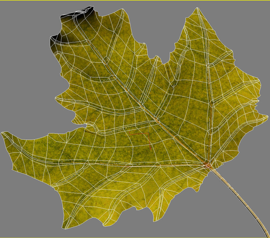 Autumn leaf poplar royalty-free 3d model - Preview no. 8